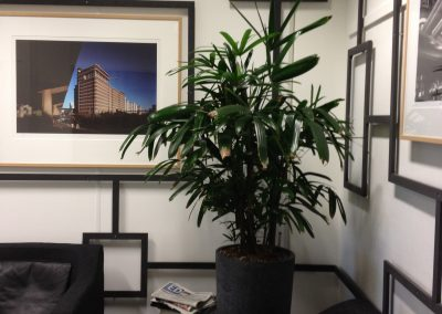 kantoor stroomschema en plant