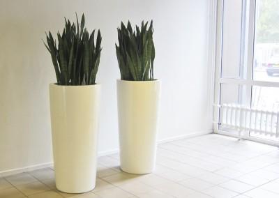 Planten bij entree