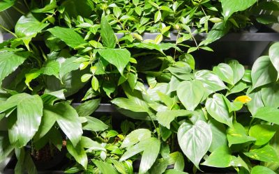 GROEN DOEN! | 10 redenen voor interieurbeplanting op je werkplek